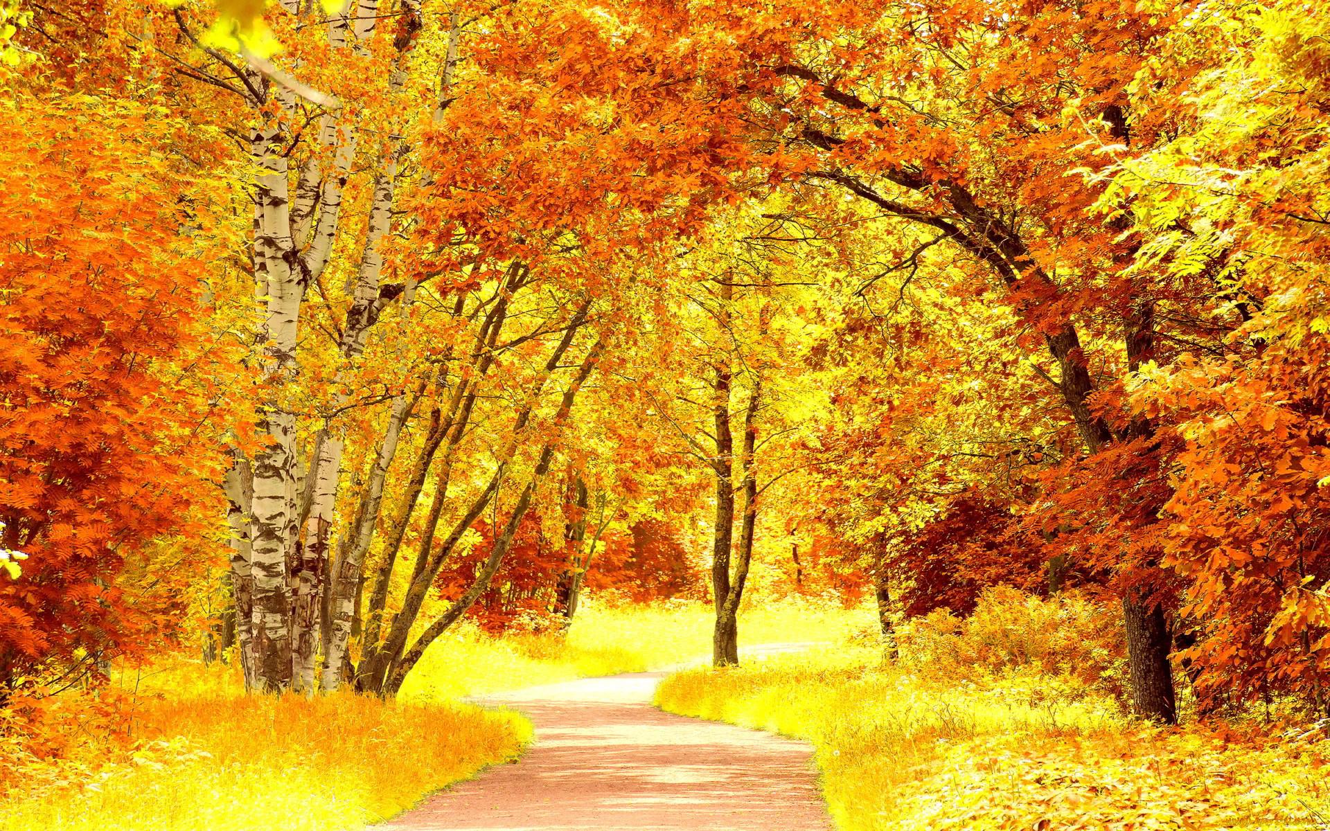 Яркие осенние картинки